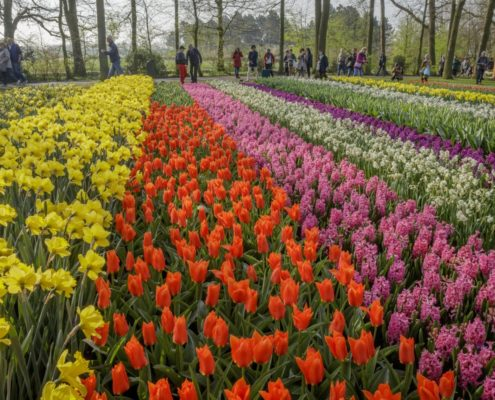 De Keukenhof